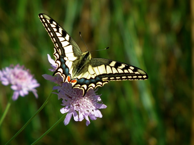 close-up-of-butterfly-pollinating-on-flower-325967